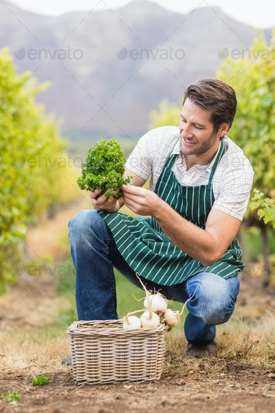 Young happy farmer looking at the vegetable in the field