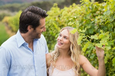 Young happy couple walking next to each other in the grape fields