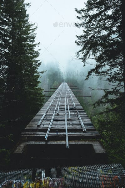 abandonded railroad bridge amidst a forest.