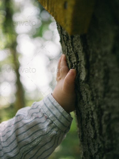A childs hand touching a tree.