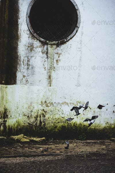 Pigeons taking flight near old drainage pipes.