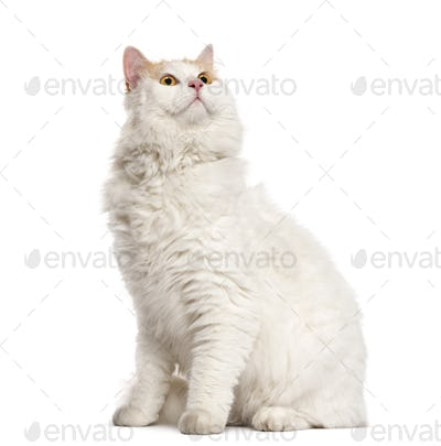 Cat sitting and looking up in front of a white background