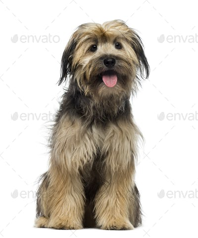 Crossbreed dog (7 months old)
