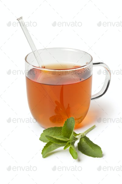 Glass with tea and fresh stevia leaves