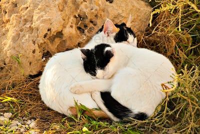 cat sleeping on the grass