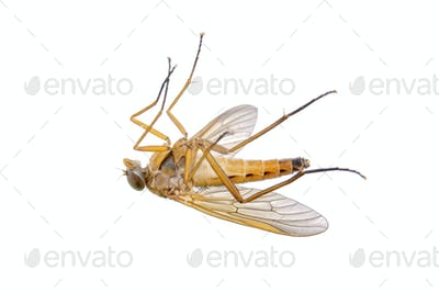 Orange insect on a white background