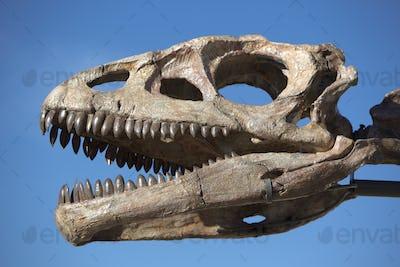 Dinosaur's head skull and blue sky, Ischigualasto