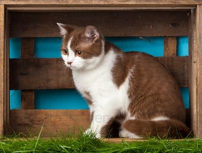 Beautiful Cat.