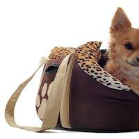 travel bag and chihuahua
