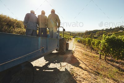 Vineyard worker on a wagon ride at farm