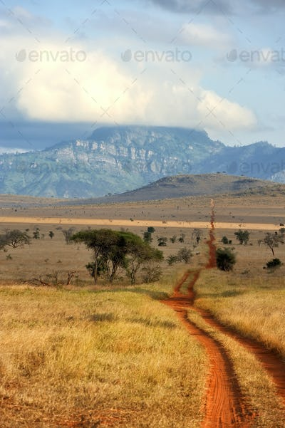 Red ground road and bush with savanna landscape in Africa