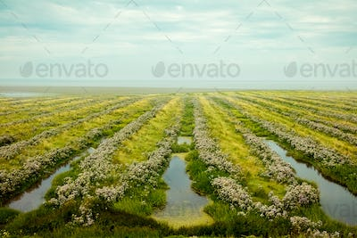 Beautiful field near the sea