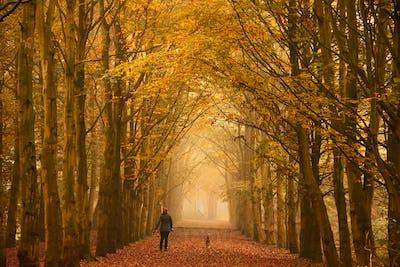 A sunday morning walk in autumn