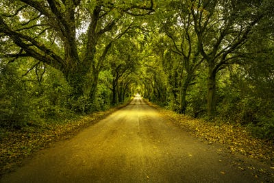 Autumn or fall, tree straight road on sunset. Maremma, Tuscany,