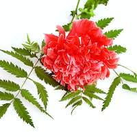 Red Poppy Decorative