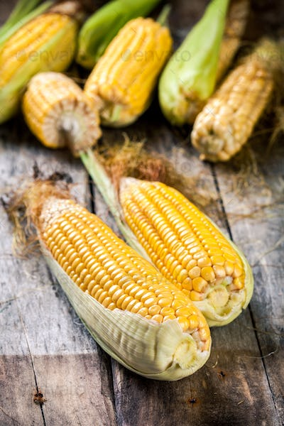 organic sweet corn in basket