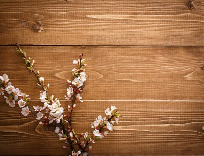Summer Flowers on wood texture background with copyspace