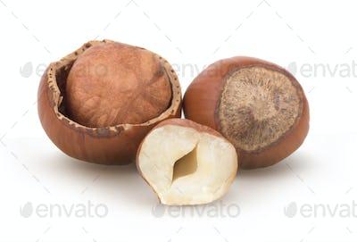 Issolated hazelnut on white background