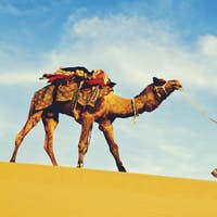 Indigenous Indian man walking desert camel Concept