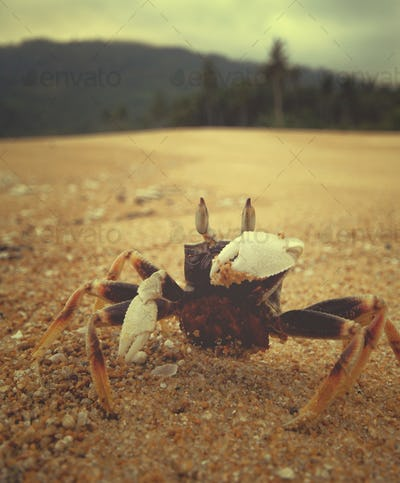 Crab Sandy Beach Coastline Tropical Shell Sea Ocean Concept