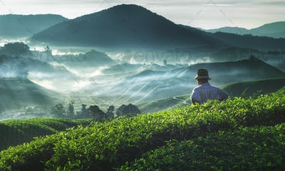 Farmer Tea Plantation Malaysia Agriculture Rural Concept