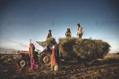India Family Faeming Harvesting Crops Harvesting Concept