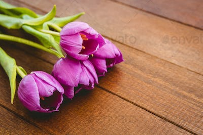 Close up view of few beautiful purple flower against wood plank