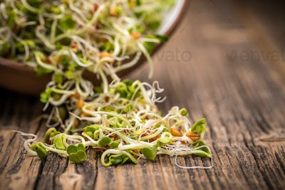 Mix of sprouted seeds