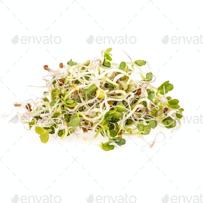 Fresh sprouts