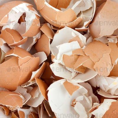 Eggshell cracks