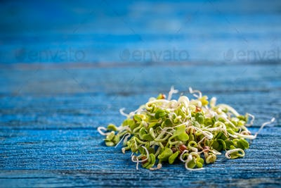 Heap of sprouted radish seeds