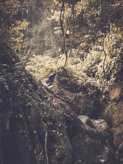 Stone rock deep in lush green jungle