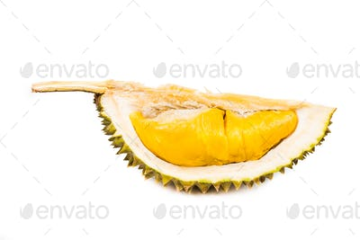Freshly harvested durian fruit with delicious golden yellow soft flesh