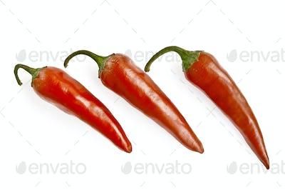 Three red hot pepper