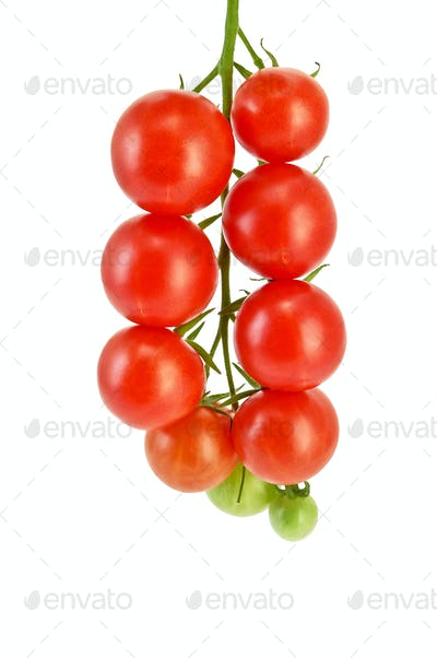 Tomatoes small on a branch
