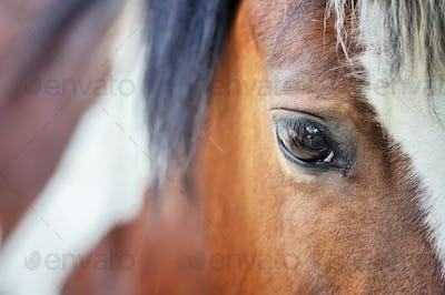 Close horse eye