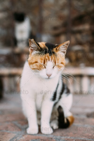 Mixed Breed White and Red Cat Sleep