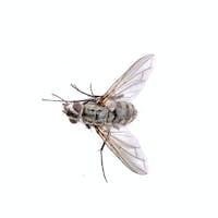 Grey fly on a black background