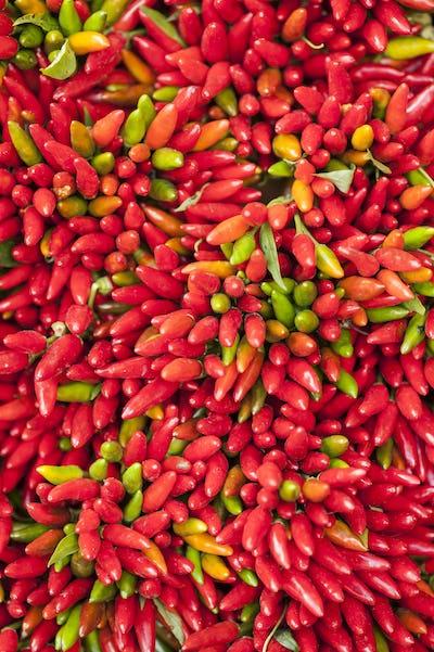 red hot pepper bunch