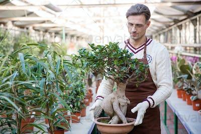 Handsome man gardener holding bonsai tree in pot