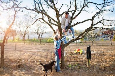 Senior couple pruning apple tree