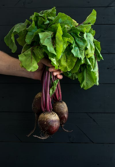 Bunch of fresh garden beetroot kept in man's hand, black wooden backdrop