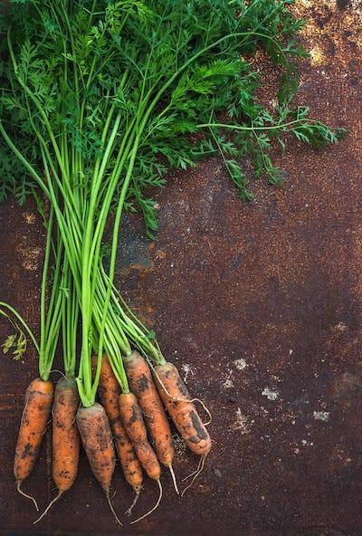 Bunch of fresh garden carrots over grunge rusty metal backdrop, top view