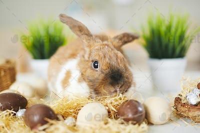 Bunny and chocolate eggs