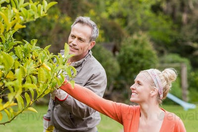 Cute couple looking at tree in the garden