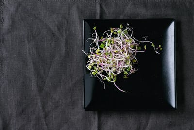 Fresh  Radish Sprouts