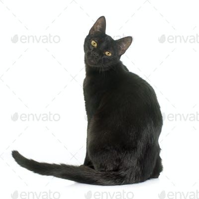 black young cat