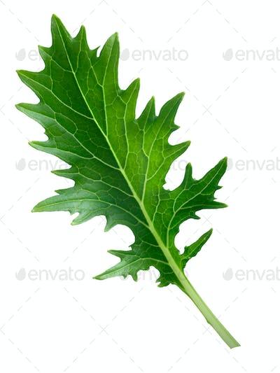 Mizuna leafy salad (Japanese mustard)