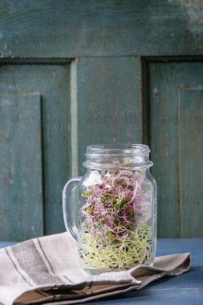 Fresh  Sprouts in mason jar