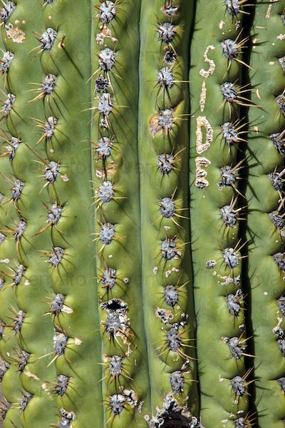 Detail of a cactus